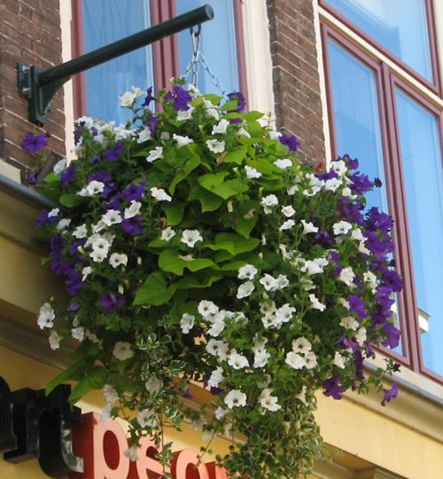 Sifu Hanging Baskets Bloembakken Fleur De Ville